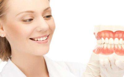 ¿Conoces los nombres de los dientes y sus funciones?